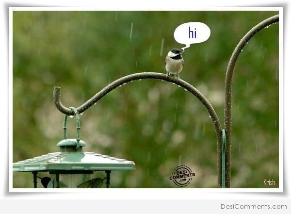 Bird wishes you hello