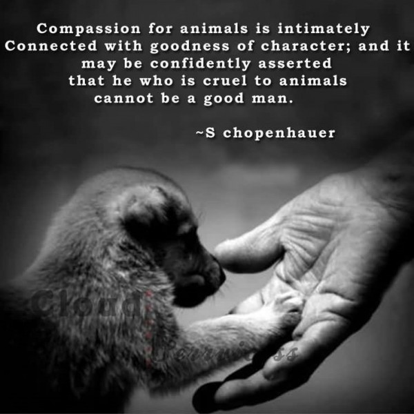 Compassion for animals is intimately connected with goodness of character 001