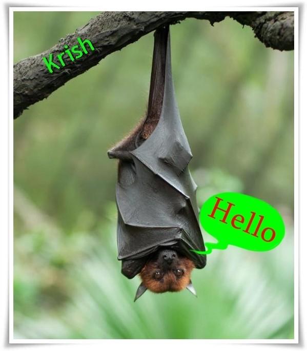 Hanging bat saying hello