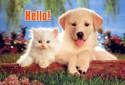 Hello cat and dog