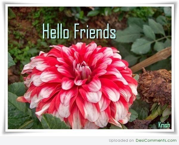 Hello friends beautiful flowers