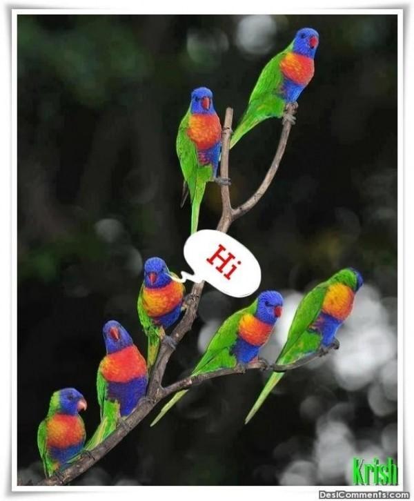 Hi colorful birds