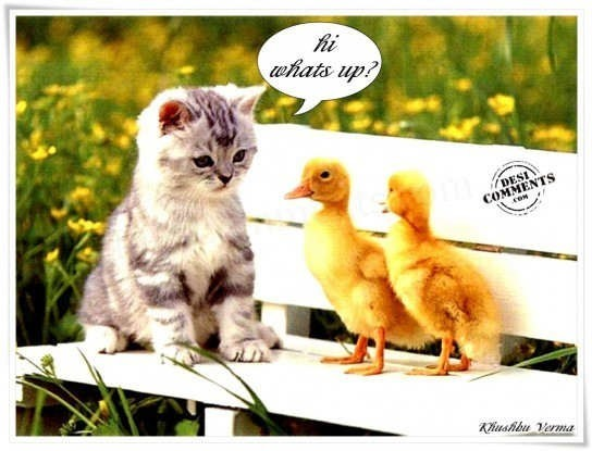Hi whats up kitten with chickens