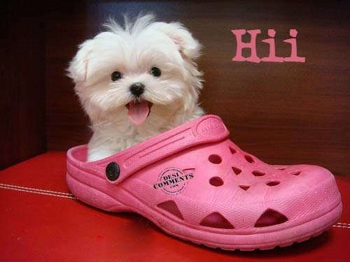 Hii cute puppy in flip flop