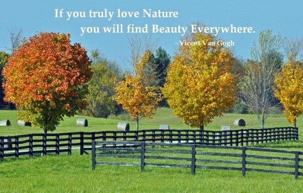 If you truly love nature you will find beauty everywhere 002