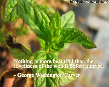 Nothing is more beautiful than the loveliness of the woods before sunrise george washingtom carver