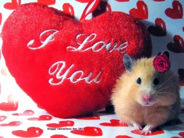 I love you happy valentines day mouse