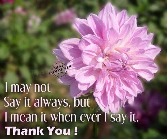 I may not say it always but i mean it when ever i say it thank you flower