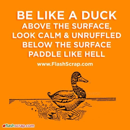 Be like a duck above the surface look calm unruffled below the surface paddle like he