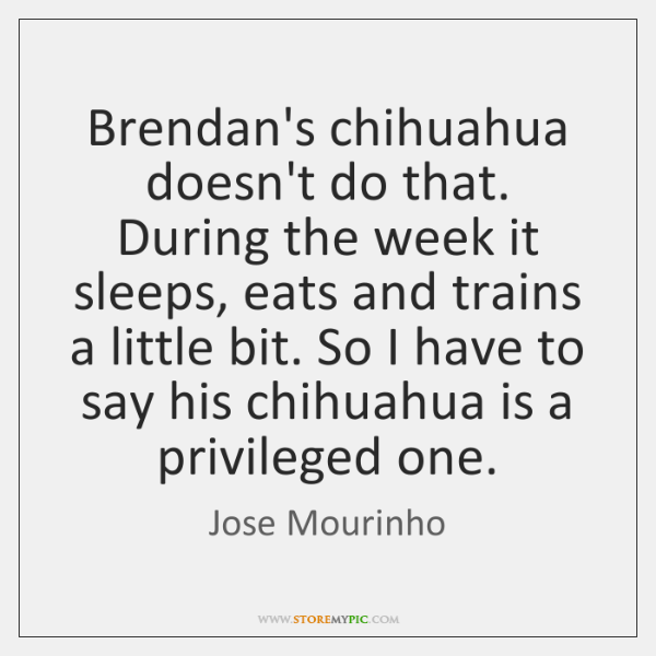 Brendan's chihuahua doesn't do that. During the week it sleeps, eats and ...