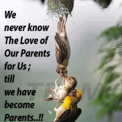 Parents Quotes Storemypic