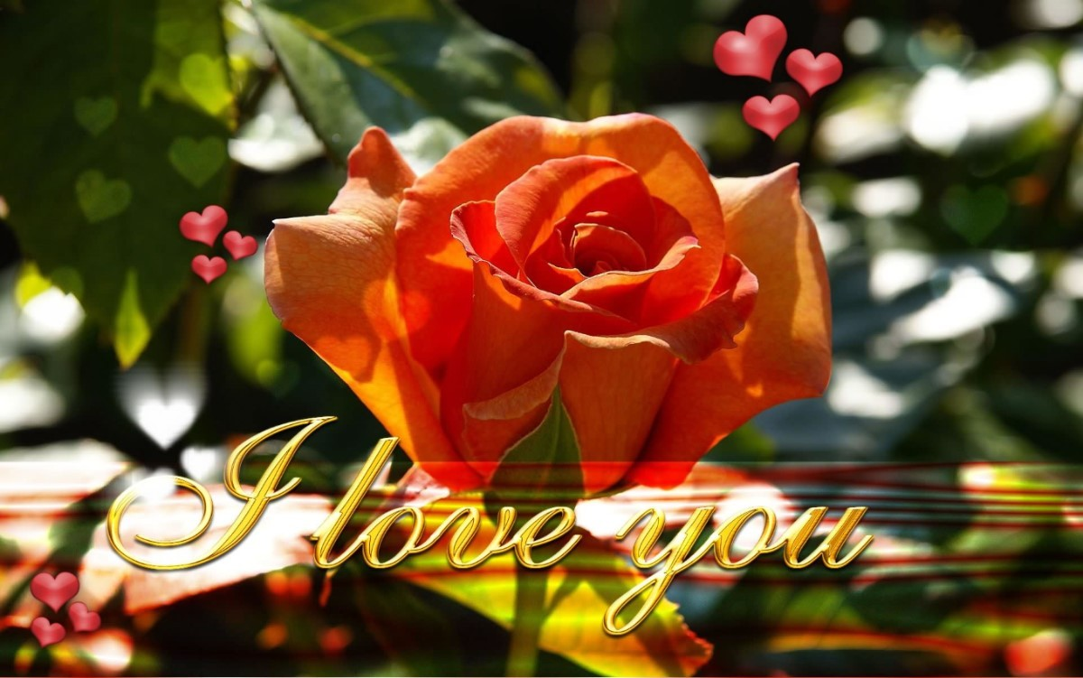 Love Beautiful Rose Wallpaper