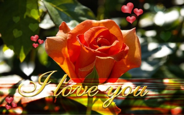 I love you beautiful rose wallpaper