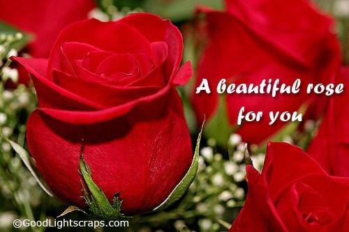 A beautiful rose for you happy rose day