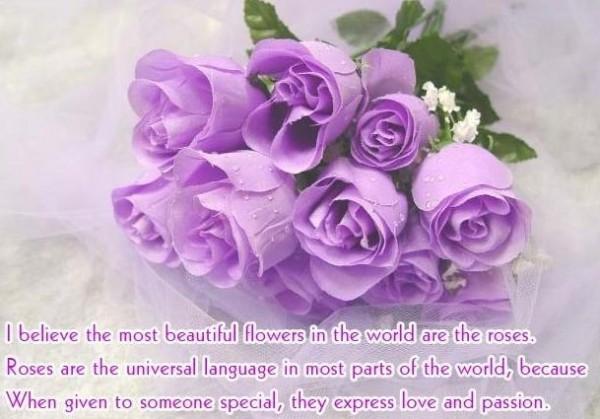 Beautiful purple roses happy rose day