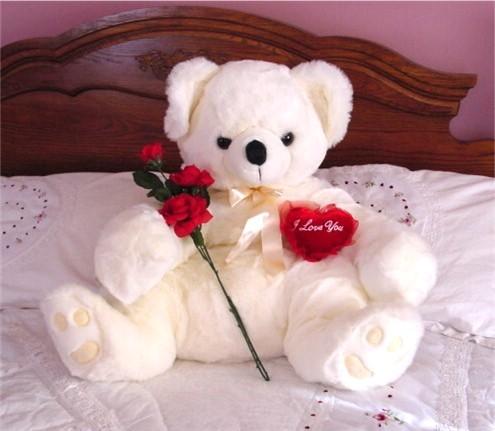 Cute white teddy with rose happy teddy bear day