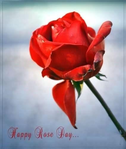 Happy rose day beautiful rose 001