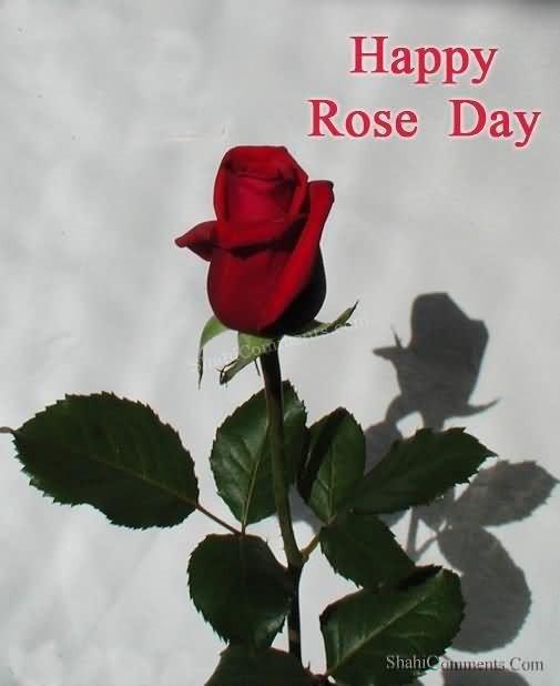 Happy rose day beautiful rose 002