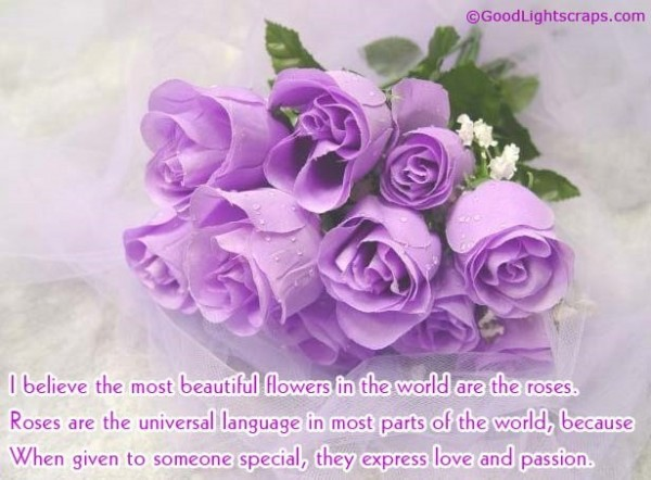 I believe the most beautiful flower in the world are the roses happy rose day