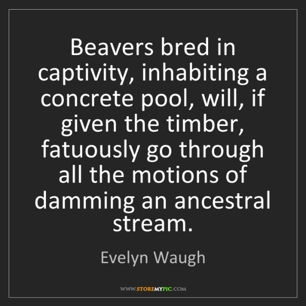 Evelyn Waugh: Beavers bred in captivity, inhabiting a concrete pool,...
