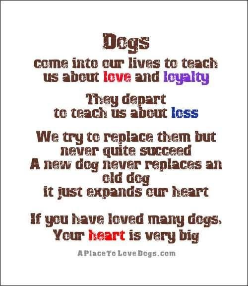 Dogs Come Into Our Lives To Teach Us About Love And Loyalty They