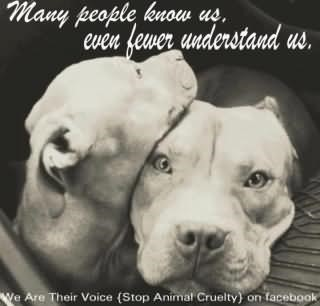 Dogs Quotes Storemypic
