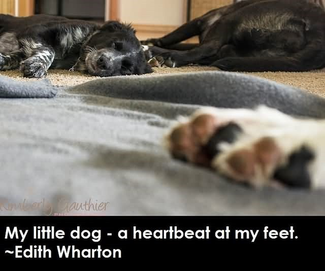 My Little Dog A Heartbeat At My Feet Edith Wharton Storemypic