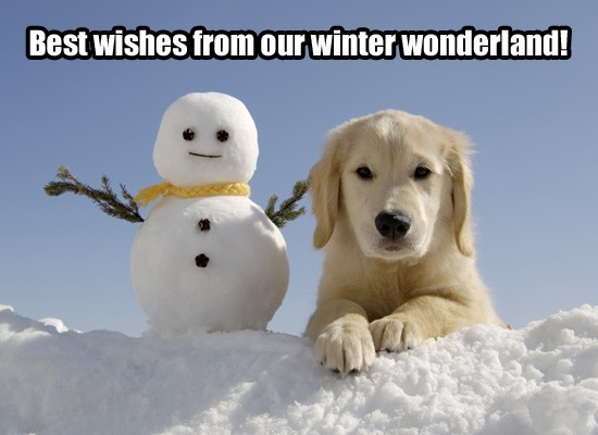 Best wishes from our winter wonderland snowman with dog
