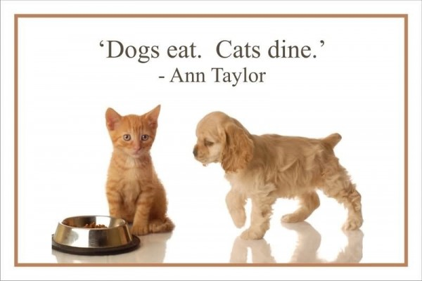 Dogs eat cats dine ann taylor