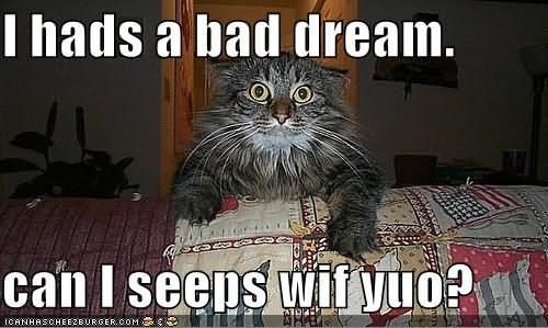 I hads a bad dream can i seeps wif yuo