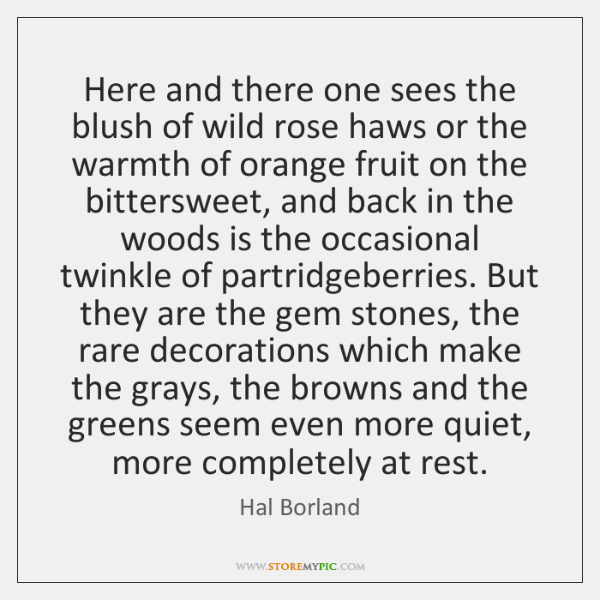 Here and there one sees the blush of wild rose haws or ...