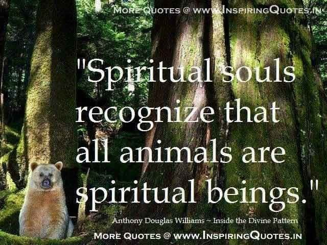 animals have souls I have a dog that i love dearly she has brought joy to my life and brought smiles to the faces of many i've heard many people say that animals don't have souls or that their souls are different from ours.