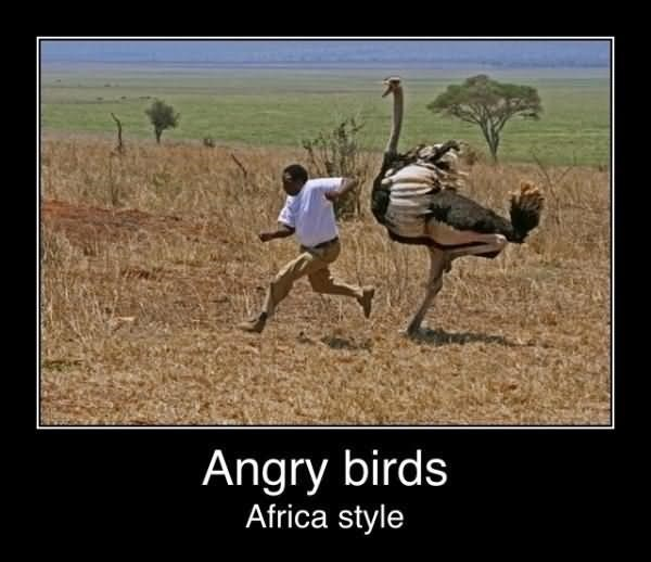 Angry birds africa style