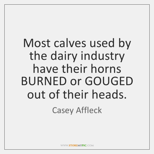 Most calves used by the dairy industry have their horns BURNED or ...