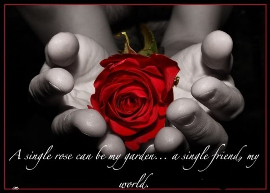 A single rose can be my garden a single friends my world