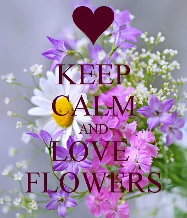 Flower Quotes StoreMyPic Fascinating Love Flower Quotes