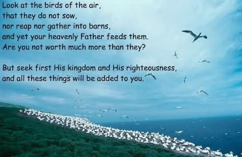 Look at the brids of the air that they do not saw nor reap nor gather into barns