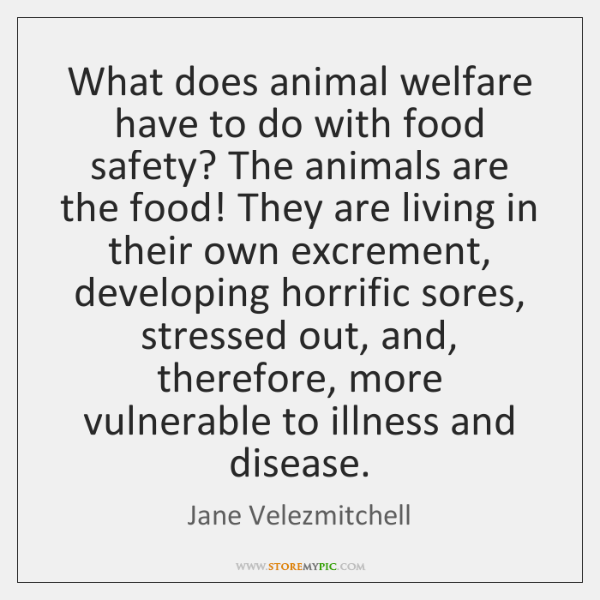 What does animal welfare have to do with food safety? The animals ...