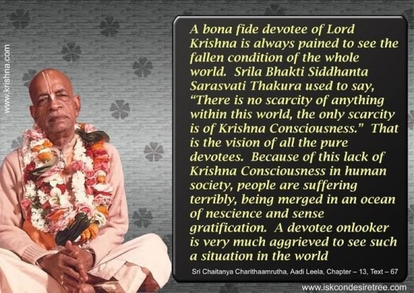 A bona fide devotee of lord krishna is always pained to see the fallen condition of