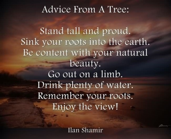 Advice from a tree stand tall and proud sink your roots into the earth