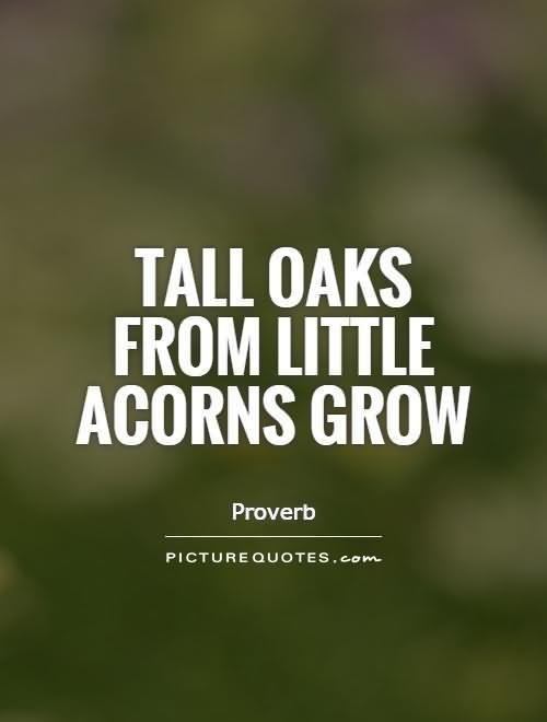 Tall oaks from little acorns grow