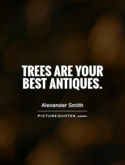 Trees are your bet antiques