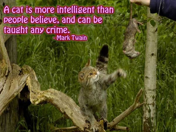 A cat is more intelligent than people believe and can be taught any crime mark twain