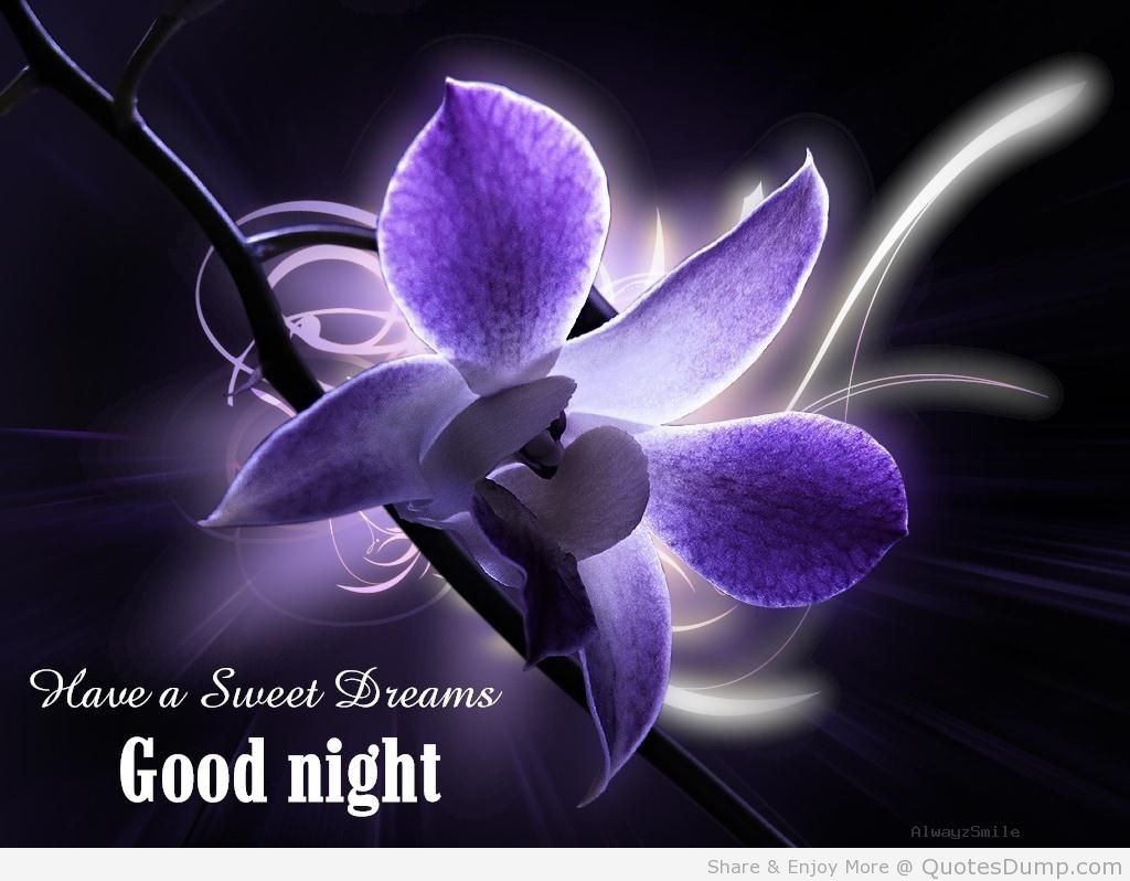 Have A Sweet Dreams Good Night Storemypic