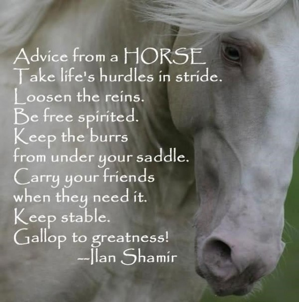 Advice from a horse take lifes hurdles in stride loosen the reins