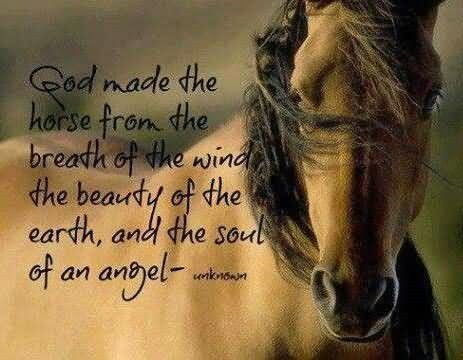 God made the horse from the breath of the wind the beauty of the earth 001