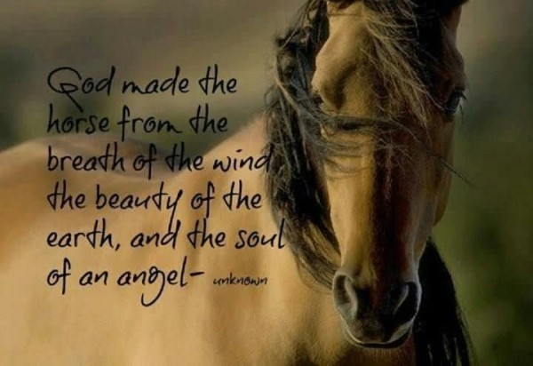 God made the horse from the breath of the wind the beauty of the earth 002