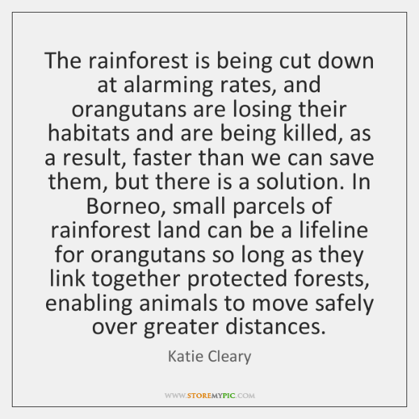 The rainforest is being cut down at alarming rates, and orangutans are ...