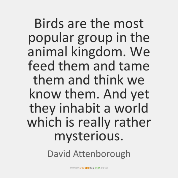 Birds are the most popular group in the animal kingdom. We feed ...