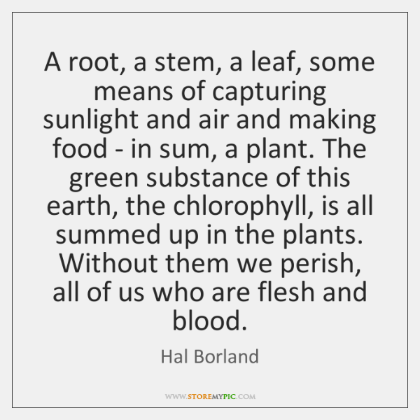 A root, a stem, a leaf, some means of capturing sunlight and ...